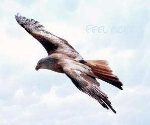 Psicoterapia è libertà