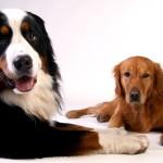 L'importanza della Pet Therapy