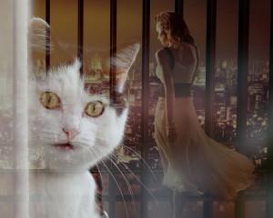 cat-891809_1280(1)