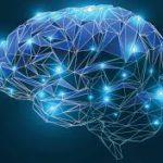 Attività che stimolano il cervello a rimanere giovane