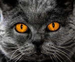 Ipnosi: fare luce dentro i vari meandri delle tecniche ipnotiche